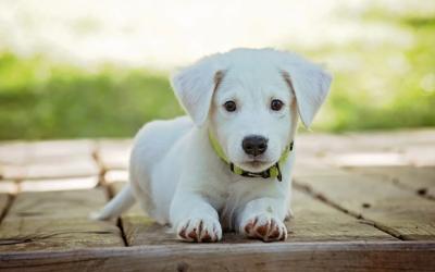 Natürlicher Zeckenschutz oder hochwertige Zeckensprays – Was hilft besser für Hunde?
