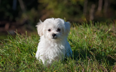 Fellpflege & Co – Wie schütze ich mein Haustier vor Zecken?